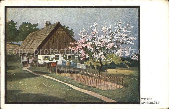 Kuenstlerkarte Weber Apfelbluete  Kat. Kuenstlerkarte