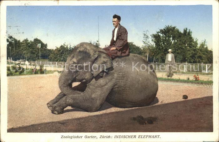 Elefant Inidischer Elefant Zoo Zuerich Kat. Tiere