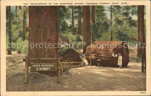 Baeume Trees Development Redwood Exhibit  Kat. Pflanzen