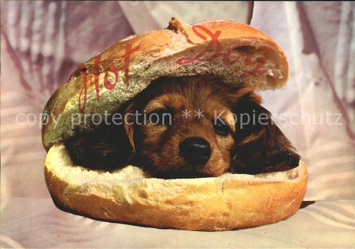 Hunde Welpe Hot Dog Humor  Kat. Tiere