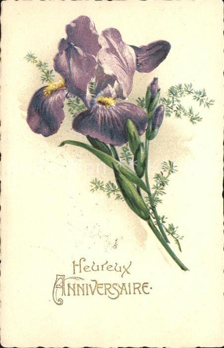 Blumen Iris Heureux Anniversaire  Kat. Pflanzen