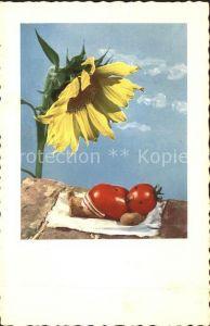 Vermenschlicht Tomaten Sonnenblume Henry Rox  Kat. Kuenstlerkarte