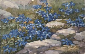 Haller Anna Nr. 305 Blumen  Kat. Kuenstlerkarte
