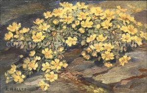 Haller Anna Nr. 246 Blumen  Kat. Kuenstlerkarte