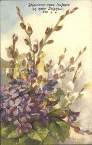 Haller Anna Nr. 211 Veilchen Weidenkaetzchen  Kat. Kuenstlerkarte
