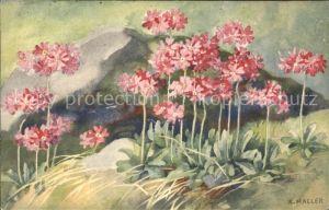 Haller Anna Nr. 311 Blumen  Kat. Kuenstlerkarte