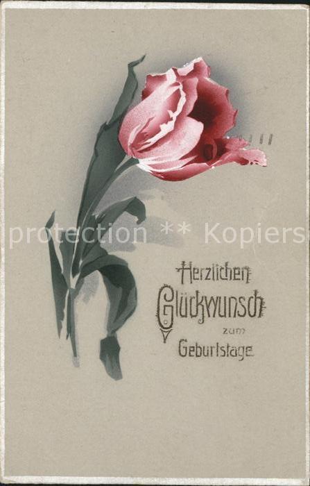 Geburtstag Glueckwunsch Tulpe  Kat. Greetings