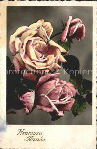 Rosen Heureuse Annee Kat. Pflanzen