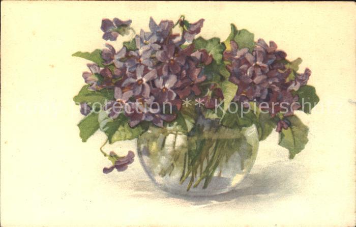 Blumen Veilchen Vase  Kat. Pflanzen