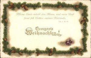 Weihnachten Tannenzapfen Veilchen Litho Kat. Greetings