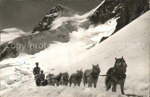 Hunde Polarhunde Hundeschlitten Jungfraujoch  Kat. Tiere