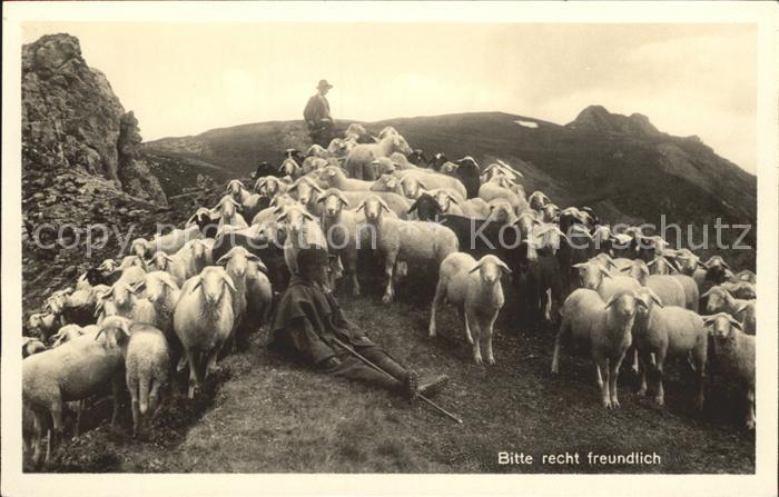 Schafe Schafherde Hirte  Kat. Tiere