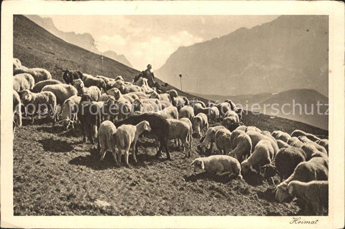 Schafe Hirte Schafherde Rhaetikon Kat. Tiere