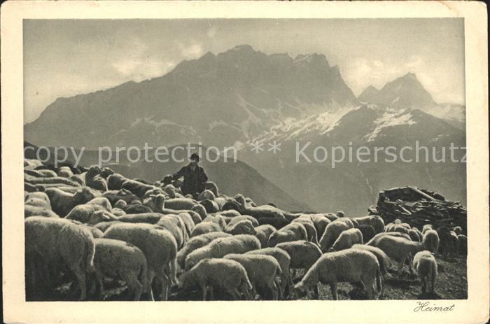 Schafe Schafherde Hirte Rhaetikon  Kat. Tiere
