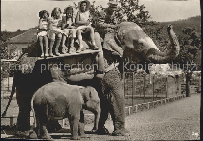 Elefant Elefantenreiten Zoo Zuerich Kinder  Kat. Tiere