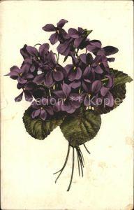 Blumen Veilchen  Kat. Pflanzen