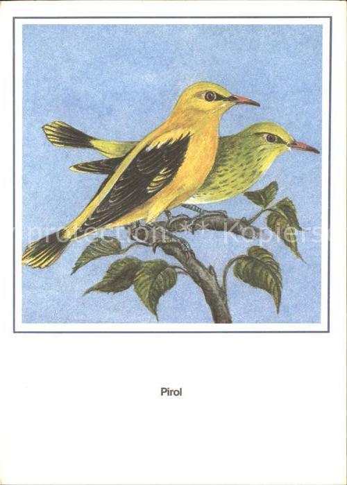 Voegel Pirol Kuenstlerkarte R. Schiller  Kat. Tiere