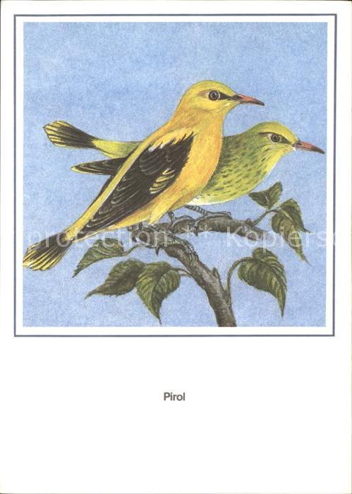 Voegel Pirol R. Schiller  Kat. Tiere