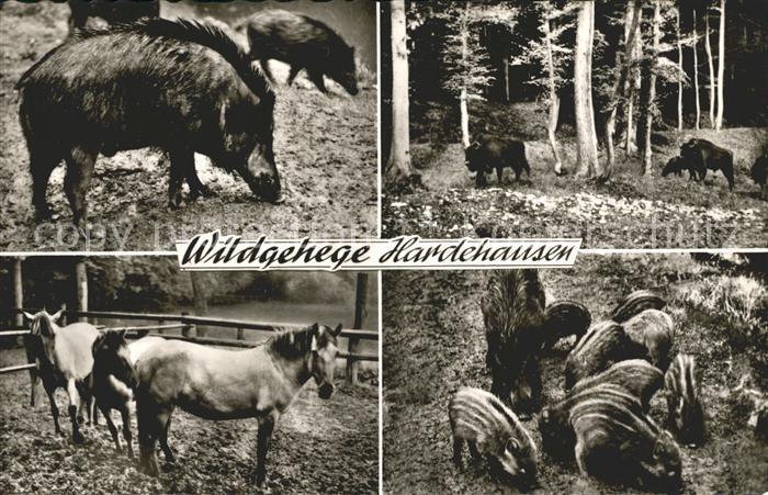 Tiere Wildgehege Hordehausen Pferde Wildschweine Kat. Tiere