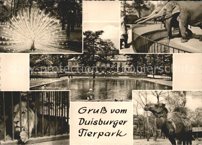 Zoo Tierpark Duisburg Loewe Elefant Pfau Dromedar  Kat. Tiere