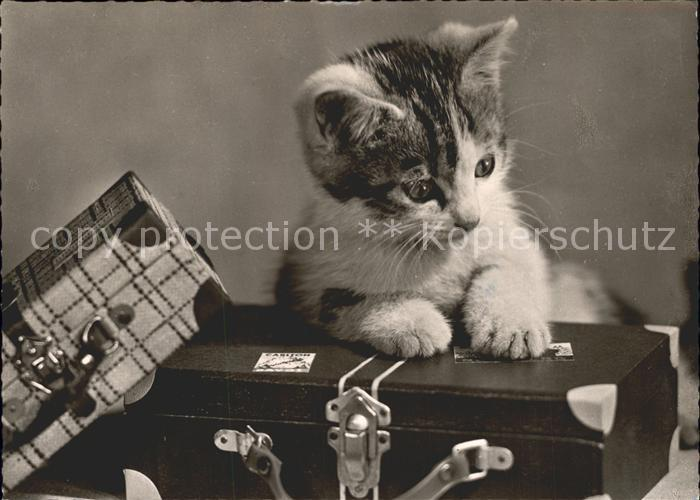 Katzen Koffer  Kat. Tiere