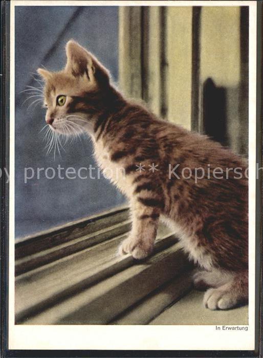 Katzen In Erwartung Kat. Tiere