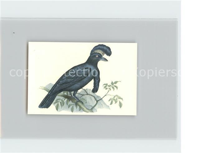 Voegel Schirmvogel Kosmos Zigarettenbilder Bild Nr. 58 Kat. Tiere