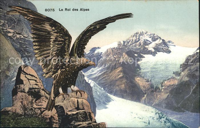 Adler Le Roi des Alpes  Kat. Tiere