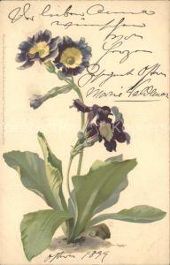 Blumen Fruehlingsblumen Verlag Meissner und Buch Litho Kat. Pflanzen