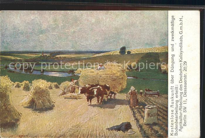 Landwirtschaft Kuh Heuernte Duengung Agrikultur  Kat. Landwirtschaft