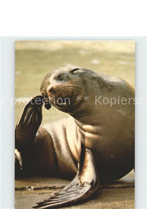 Seehunde Robben