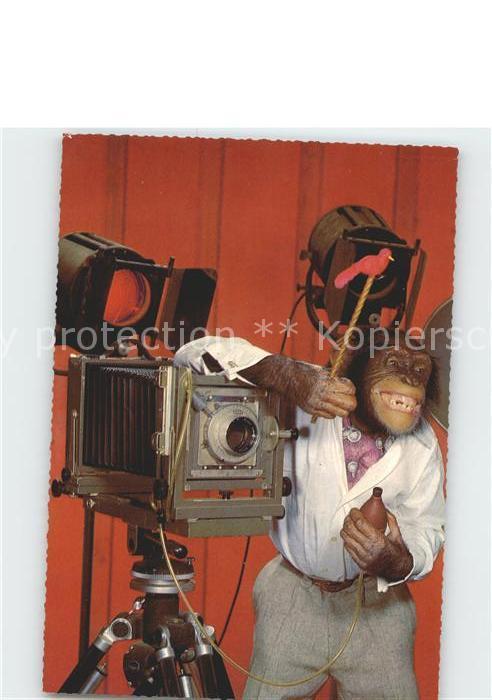 Affen Fotoapparat Fotograf  Kat. Tiere