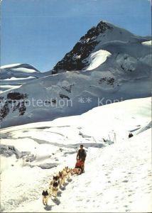 Hunde Polarhunde Schlitten Jungfraujoch Kat. Tiere