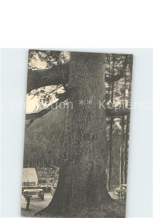 Baeume Trees Tanne Forsthaus im Rollwassertal Kat. Pflanzen