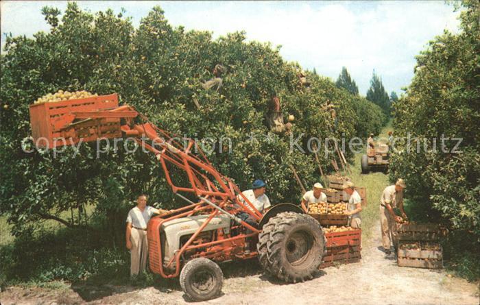 kg59795 Ernte Landwirtschaft Citrus Harvest Florida Traktor  Kat. Landwirtschaft