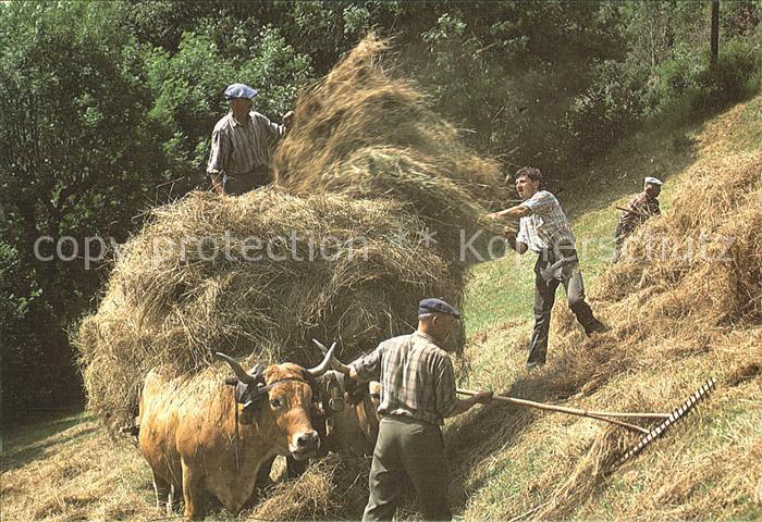 Ernte Landwirtschaft Fenaison Heumahd  Kat. Landwirtschaft