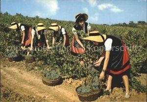 Ernte Landwirtschaft Trauben Weinlese Vendanges Languedoc Kat. Landwirtschaft