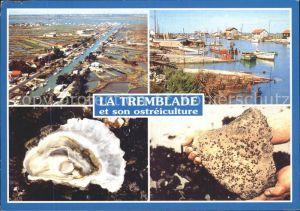 Meerestiere Austern Austernzucht Ostreiculture Huitres La Tremblade  Kat. Tiere