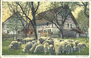 Foto Gaberell J. Nr. 2735 Motiv Wehntal Schafe Bauernhaus Kat. Fotografie