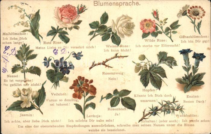 Blumen Blumensprache Gaensebluemchen Rosen Wachholder Hopfen Litho Kat. Pflanzen