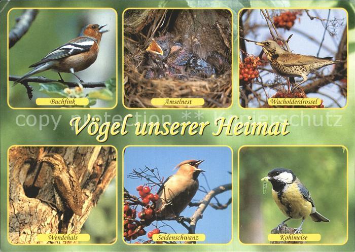 Voegel Buchfink Wacholderdrossel Wendehals Kohlmeise Seidenschwanz Kat. Tiere