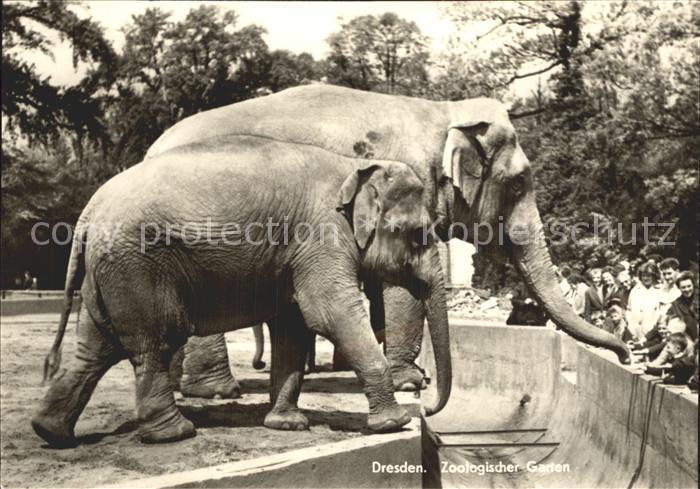 Elefant Zoo Dresden  Kat. Tiere