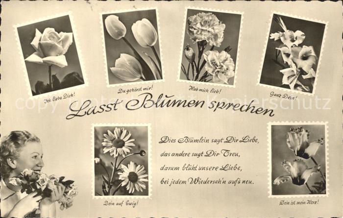 Blumen Blumensprache Rose Tulpe Nelke Gedicht  / Pflanzen /