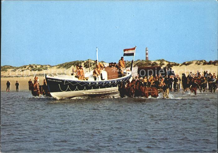 Ameland Pferde im Wasser Boot Kat. Niederlande