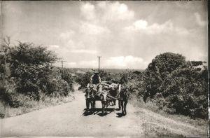 Saint Kitts Nevis Pferdekutsche / Basseterre /