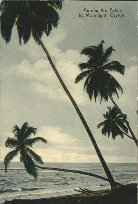 Ceylon = Sri Lanka Among the Palms by Moonlight Kat.