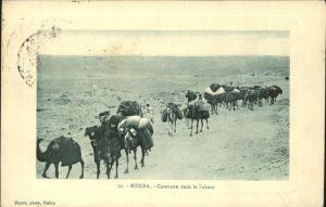 Biskra Caravane dans le Sahara Kamele