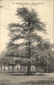 Velizy-Villacoublay Foret de Chaville Arbre Vert Cedre Zeder / Velizy-Villacoublay /Arrond. de Versailles