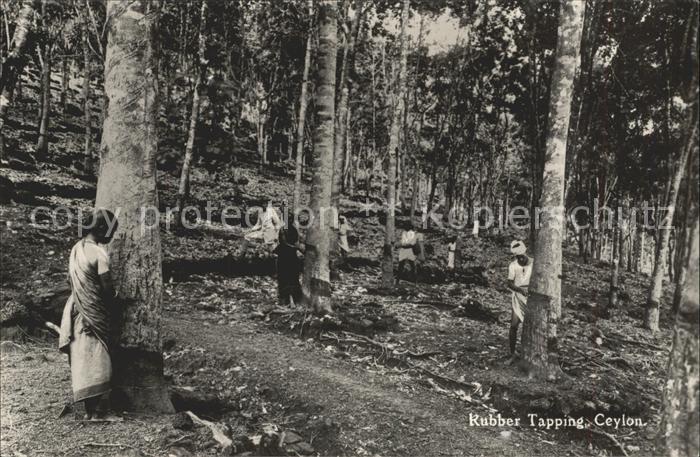 Ceylon Sri Lanka Rubber Tapping Kat.