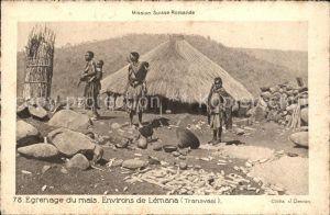 Transvaal Suedafrika Mission Suisse Romande Egrenage du mais Eingeborene Kat.